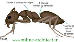ابعادها و فضا هاي مورد نياز مورچه