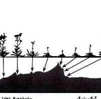 در اقلیم سرد و خشك چه نوع گیاهانی رشد میکنند